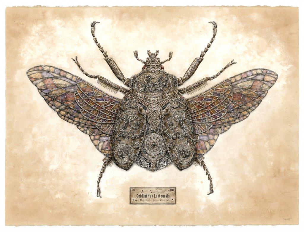 Illustration d'un insecte par Steeven Salvat
